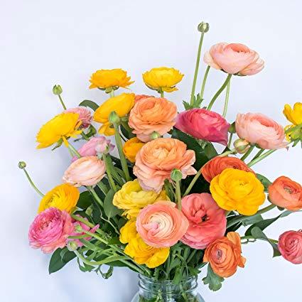 A beautiful bouquet of ranunculus flowers