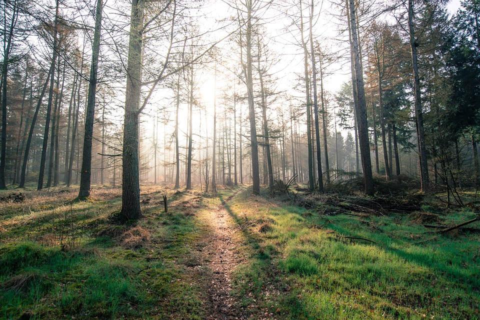 forest-2471199_960_720.jpg