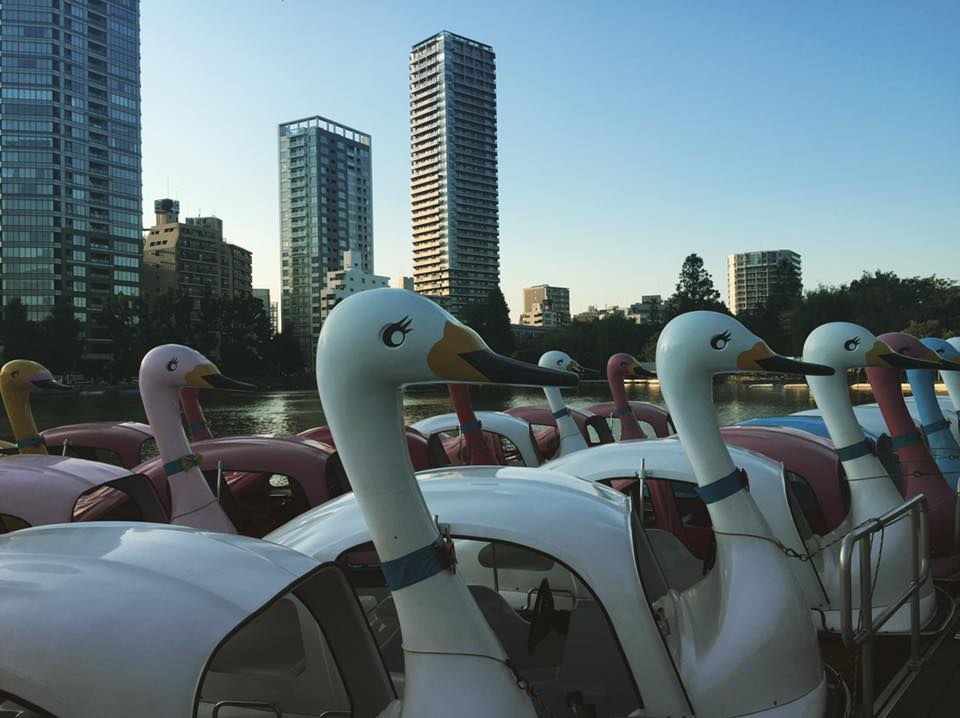 Swan boats - photo by Claudia Tory