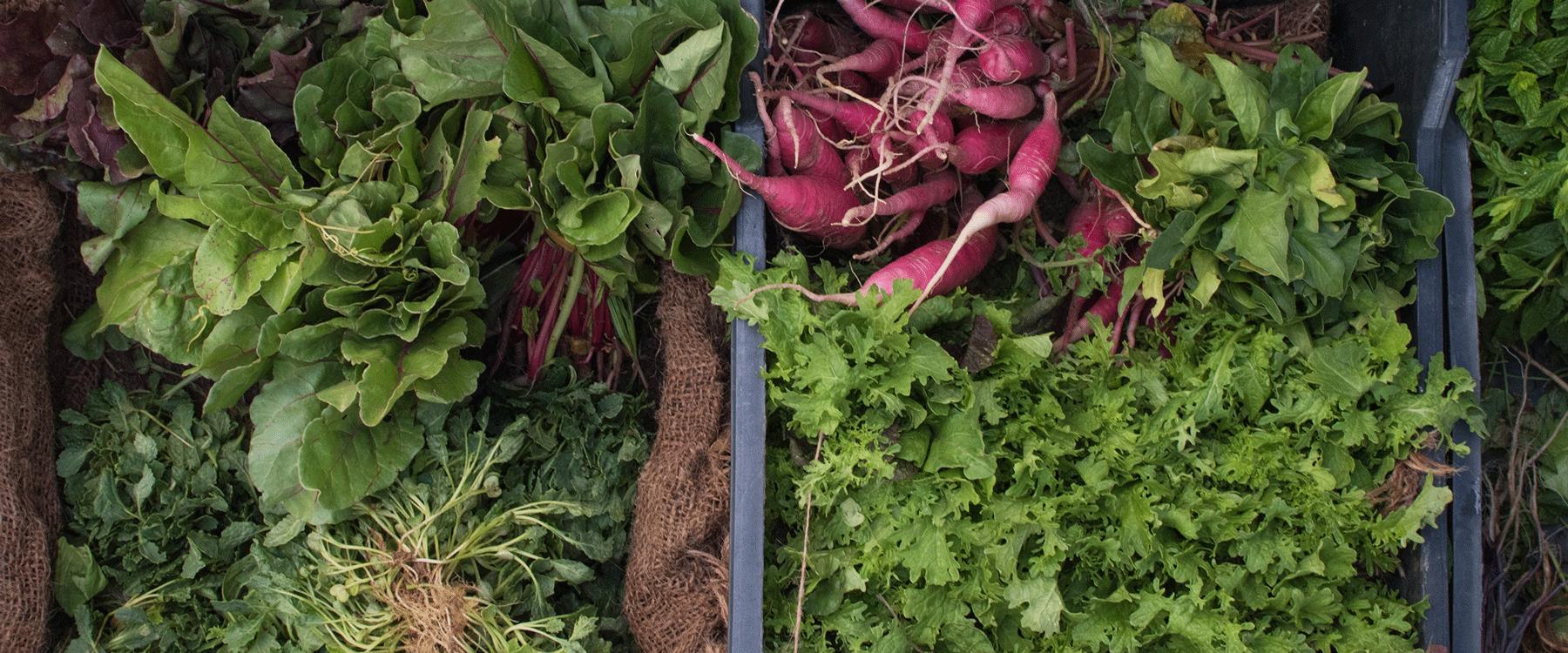 FARM TO TABLE PHILOSOPHY - Eat seasonally, eat locally, live sustainable at Drayton Ridge.