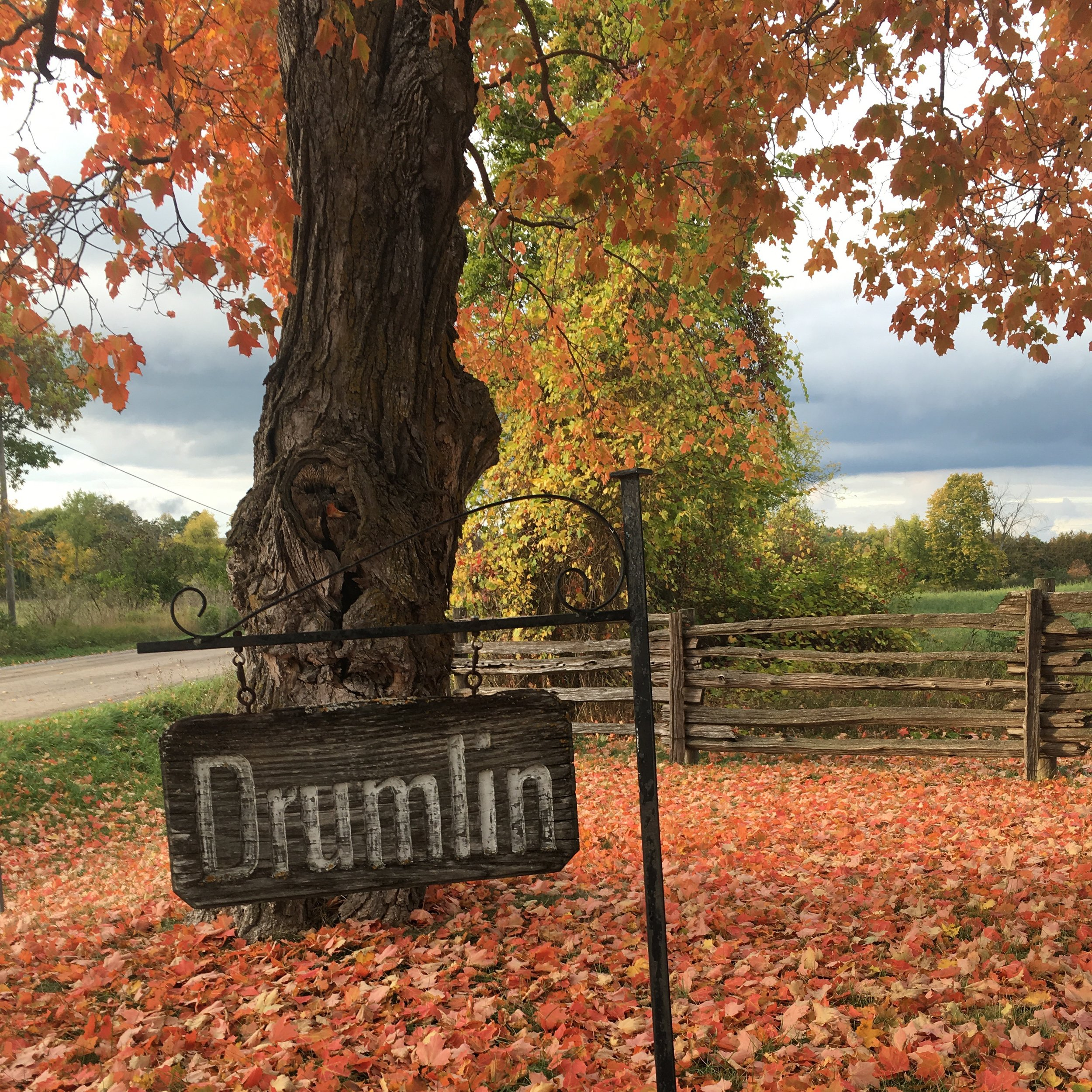 Drumlin Sign Fall .JPG