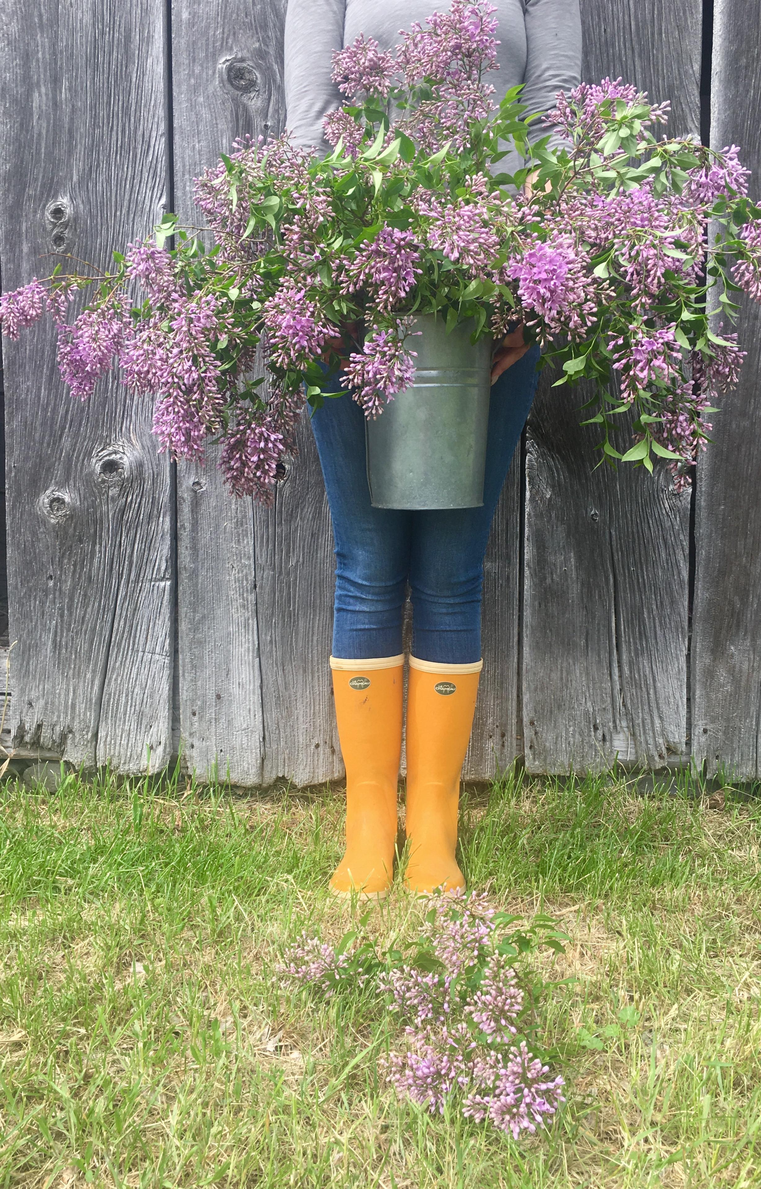 Lilacs & Barn.jpg
