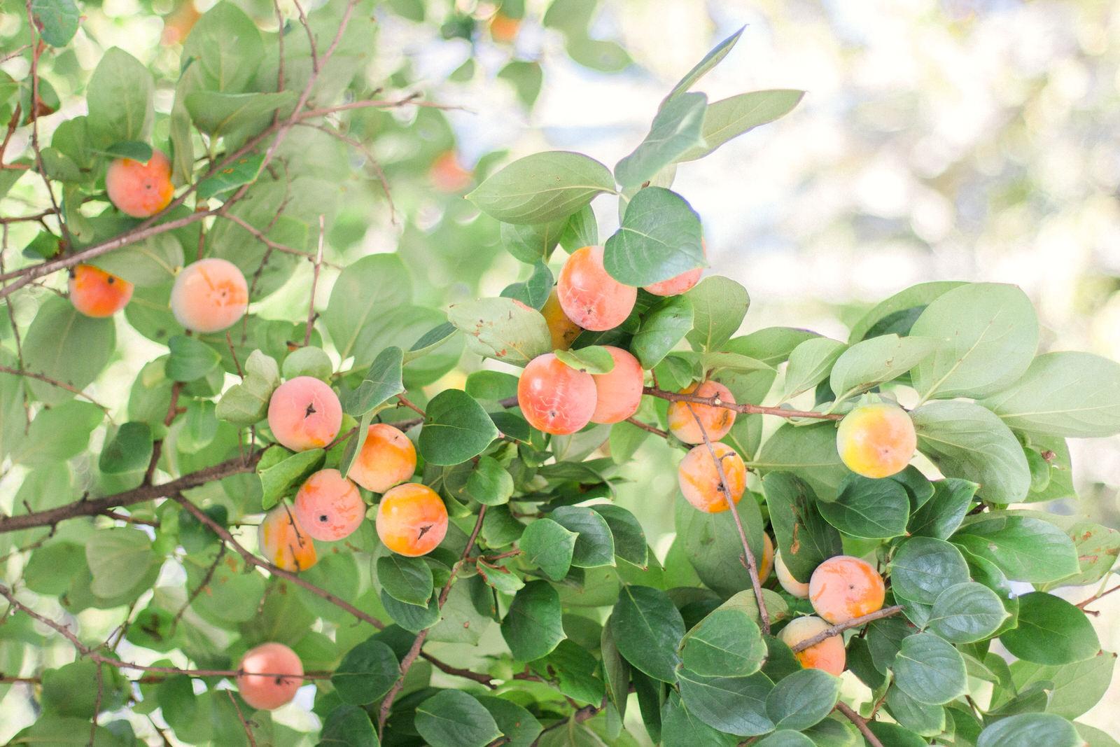 Peaches-Rome-Travel-photography.jpg