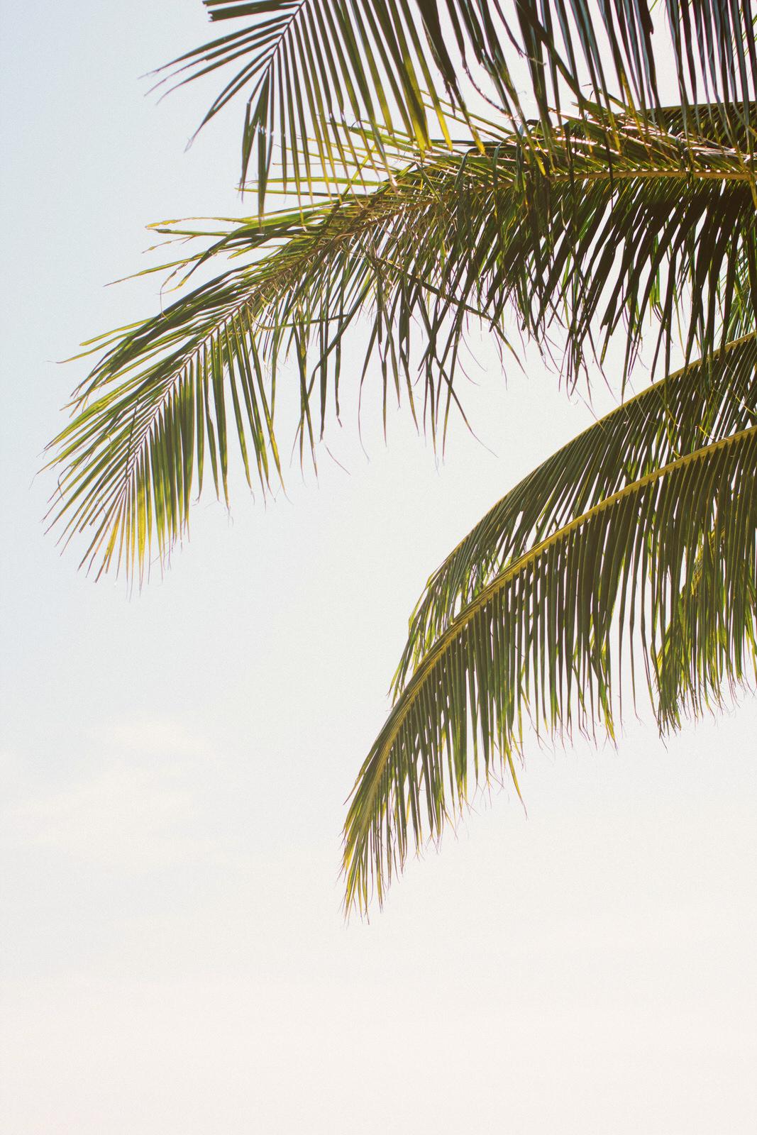 palm-tree-travel-lisa-pires.jpg