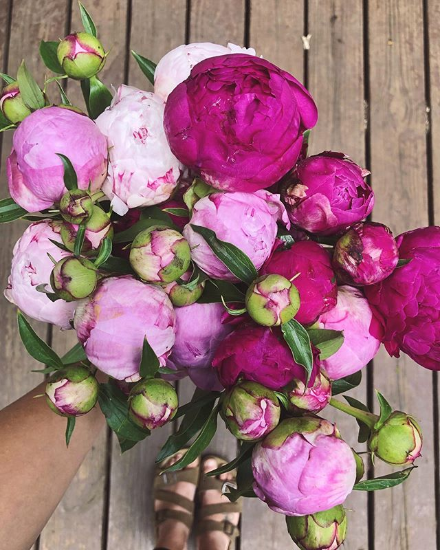 FRIYAY! ☀️ See y'all today at Pratt's with a bucket full of local peony for one of the last times!! We will be parked our front from 3:00-6:00 along with some other crafters! Stop by and say hi 🥰