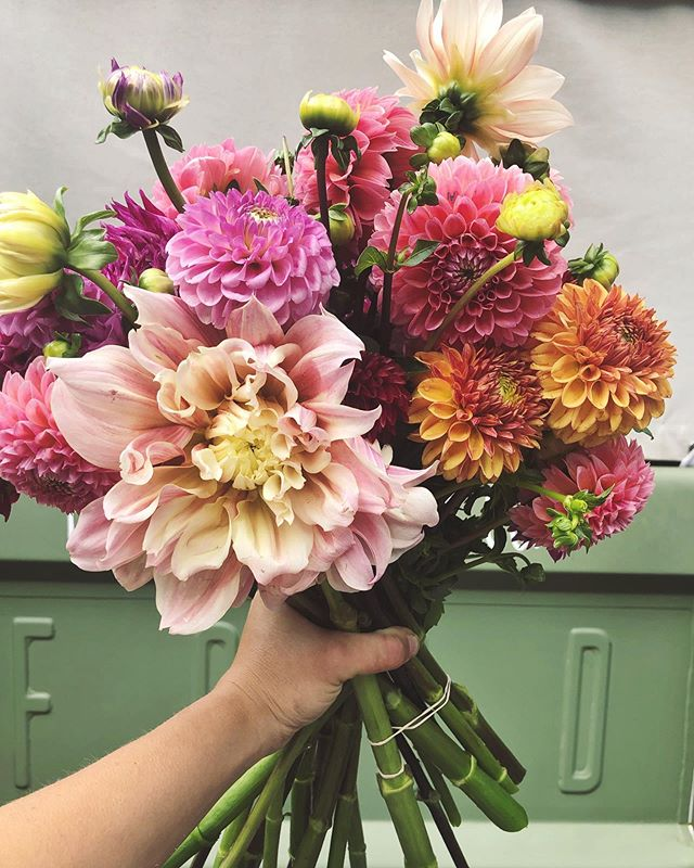 Talk about a happy Friday! It's a rare and beautiful time when spring and summer collide in the flower world 😍 We have Dahlia AND Peony on the truck this weekend!! Find us today (Friday) @shopbpm from 10:00-1:00 and tomorrow (Saturday) @honeybeecoffeeco West from 9:00-12:00! We can't wait to see you and spread some of this local beauty this week 🥰