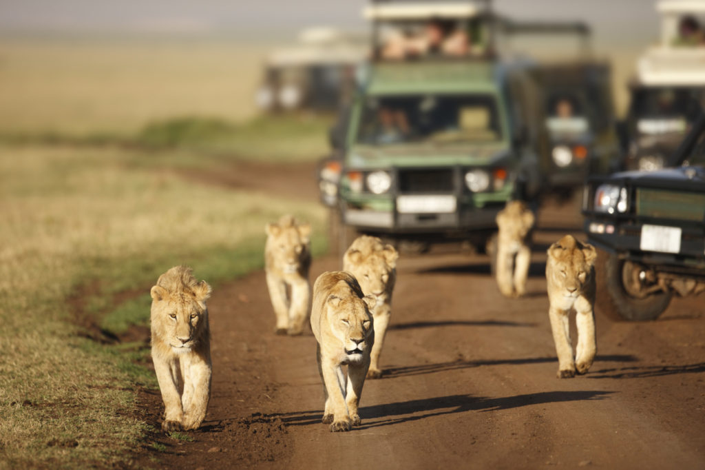 Kenya-Safari-Tours-Safety-Measure-while-on-Safari-1024x682.jpg