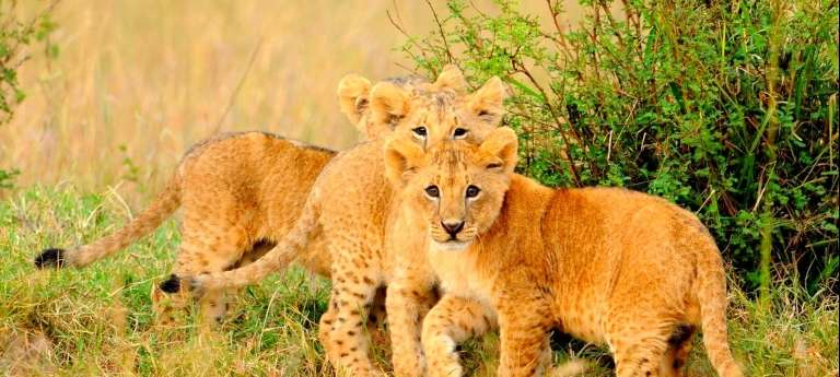 mara_ngenche_wildlife_close_up_(5)__1920x864__768x346-wide.jpg