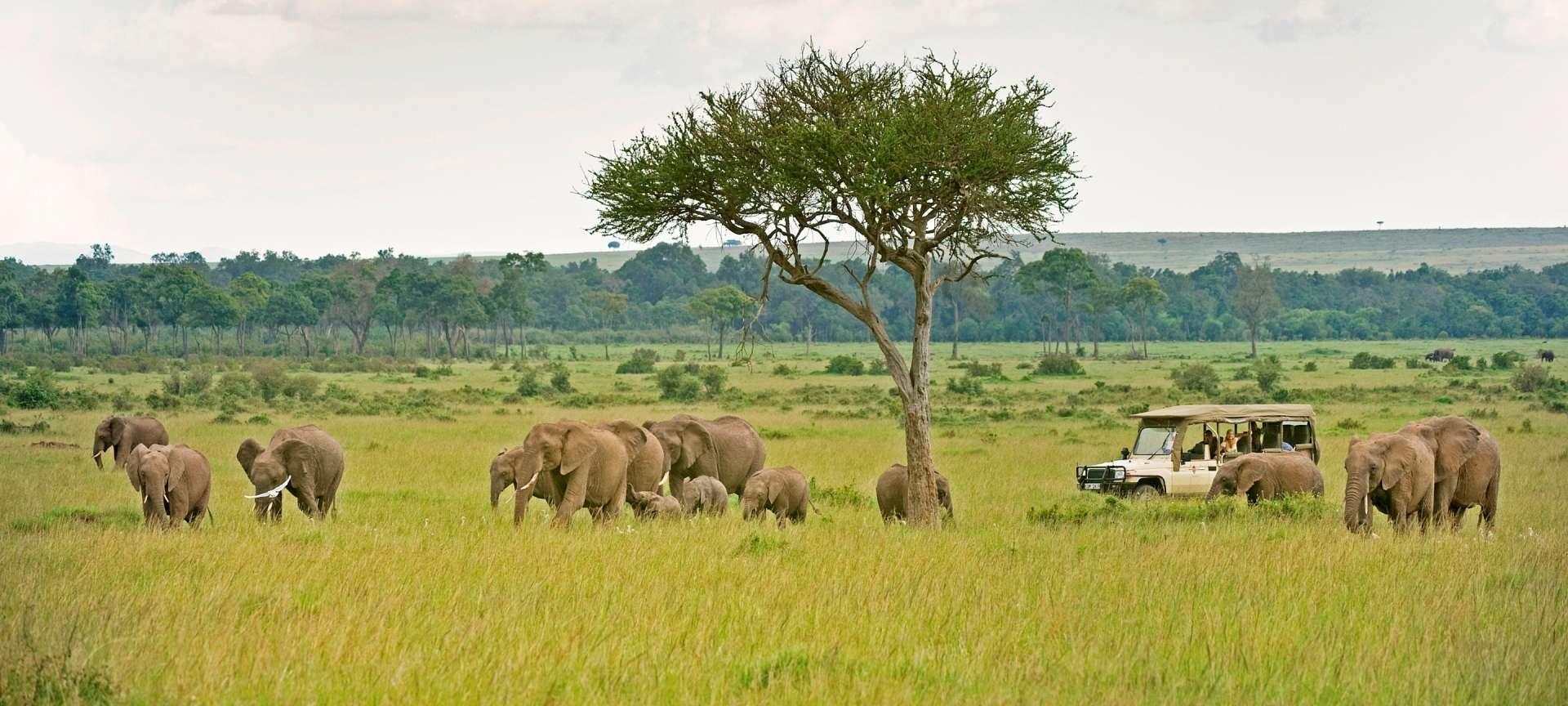 olonana_camp-olonana_elephant_2__1920x864_Masai_mara.jpg