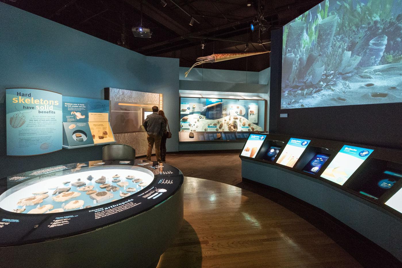 Field Museum (Chicago, Illinois)