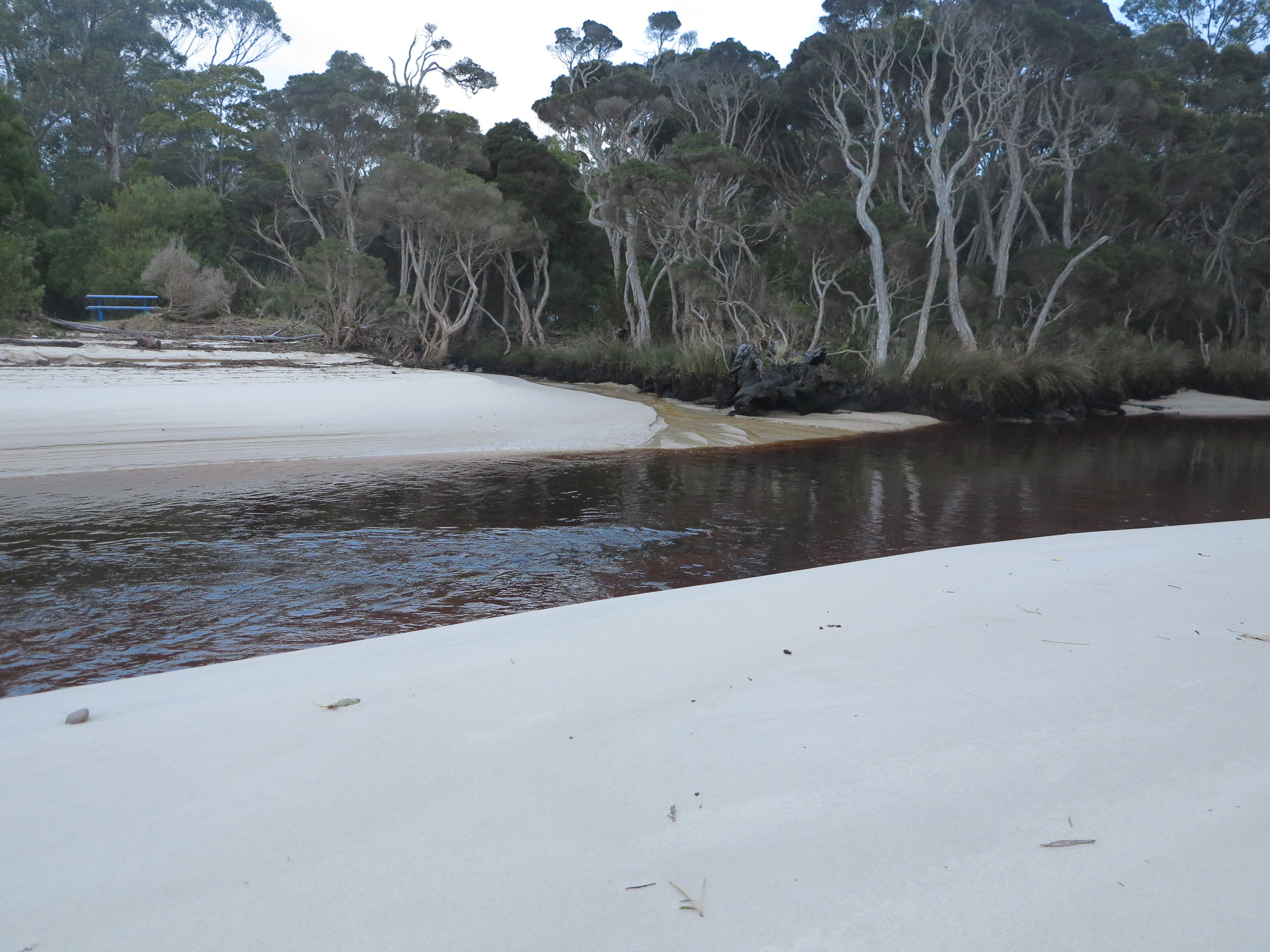 creek with fresh sand.JPG