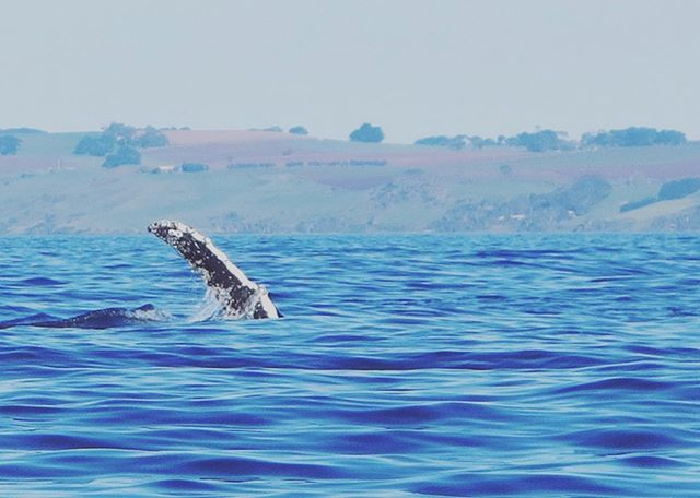 👋 hi to you too Mr Whale 💙