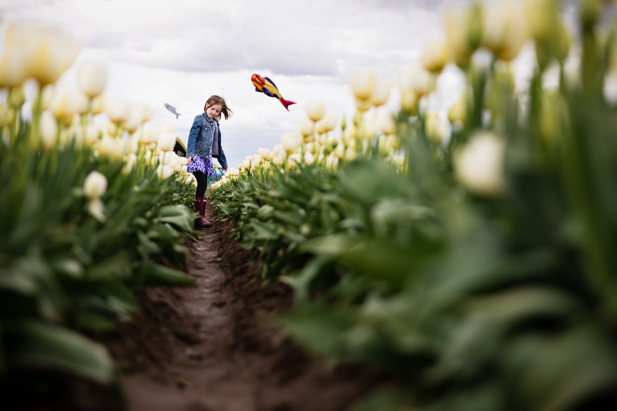 girl standing amidst white tulips with colorful kites blowing in the wind behind her by rebecca hunnicutt farren