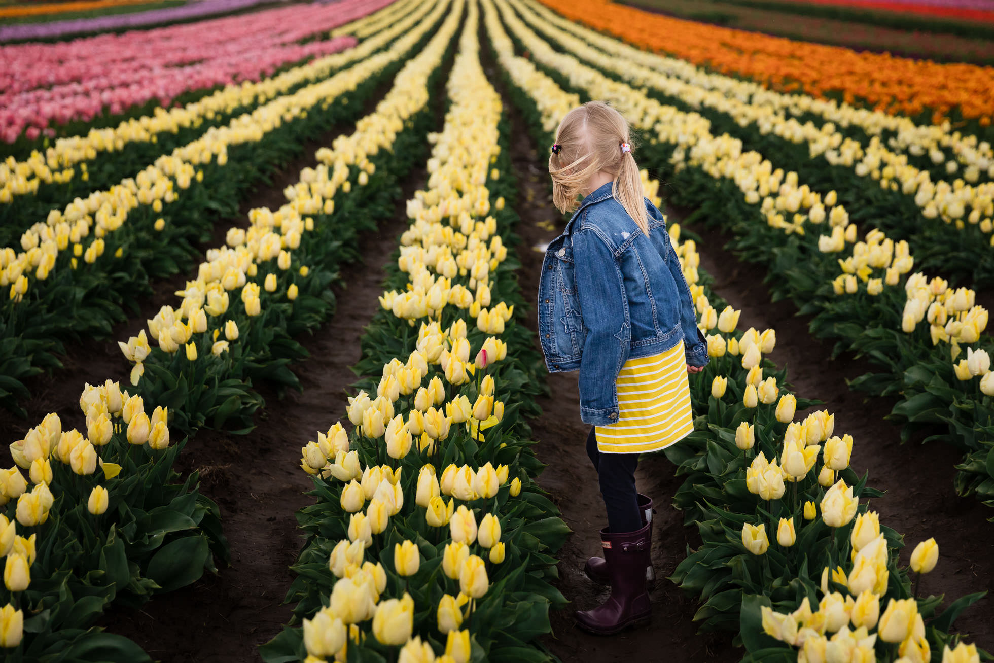 wind blows girls hair standing in tulip fields by rebecca hunnicutt farren childrens photographer in portland oregon and vancouver washington
