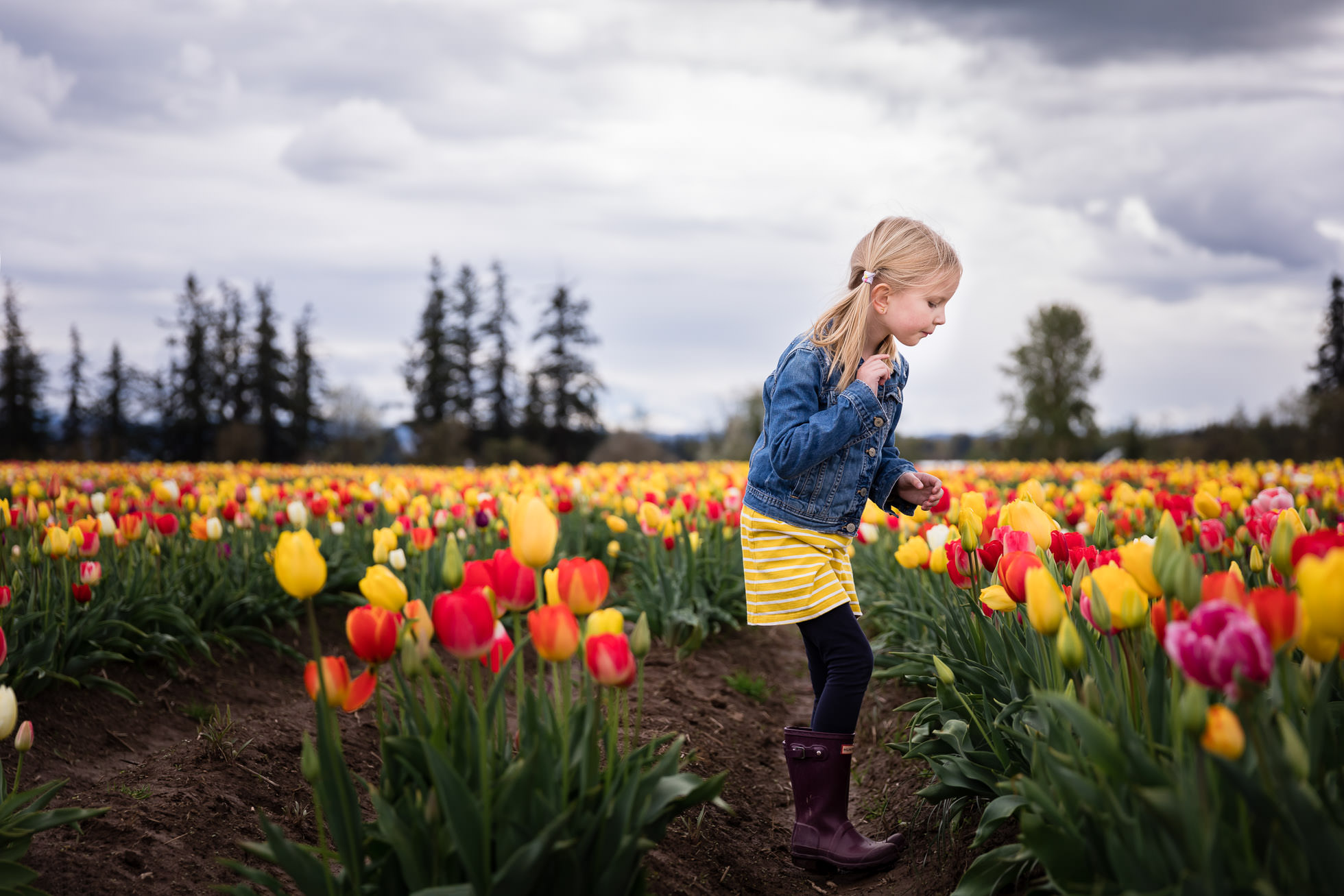 girl looking at tulips at oregon tulip festival portland childrens photographer by rebecca hunnicutt farren