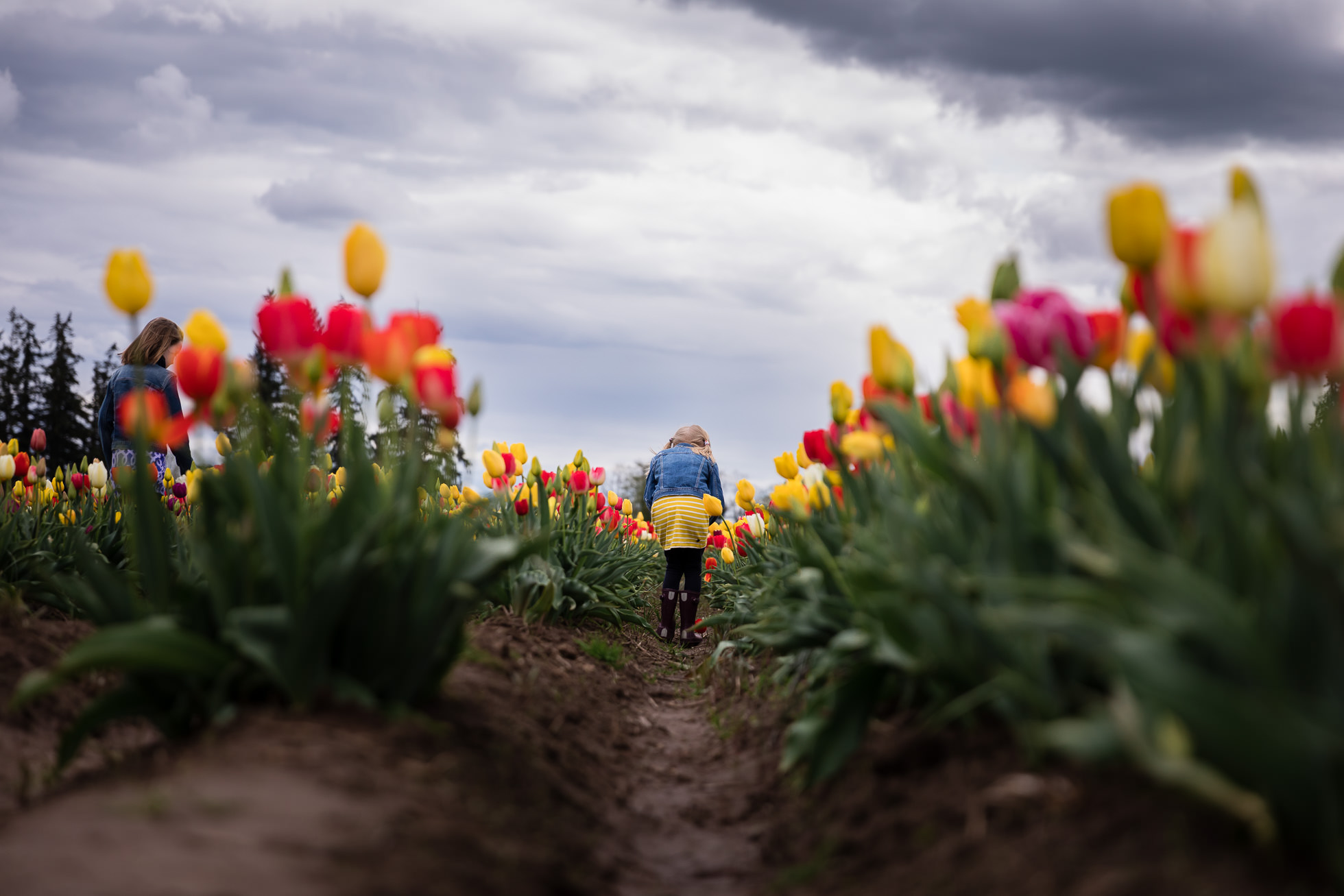 girl in the tulip field by rebecca hunnicutt farren premiere lifestyle childrens and family photographer in portland oregon and vancouver washington