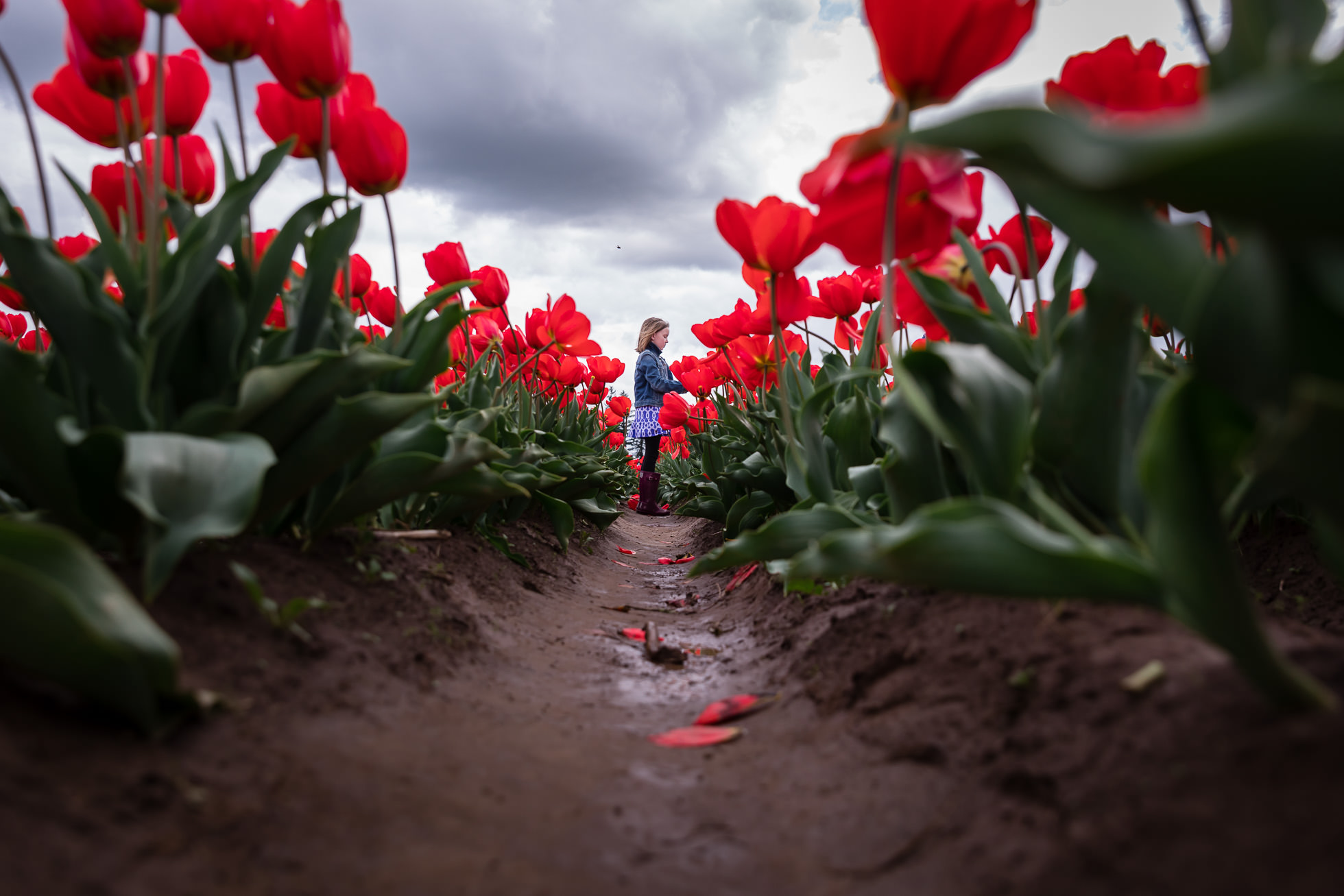 low perspective image of girl standing in red tulips by rebecca hunnicutt farren portland oregon and vancouver washington family lifestyle photographer