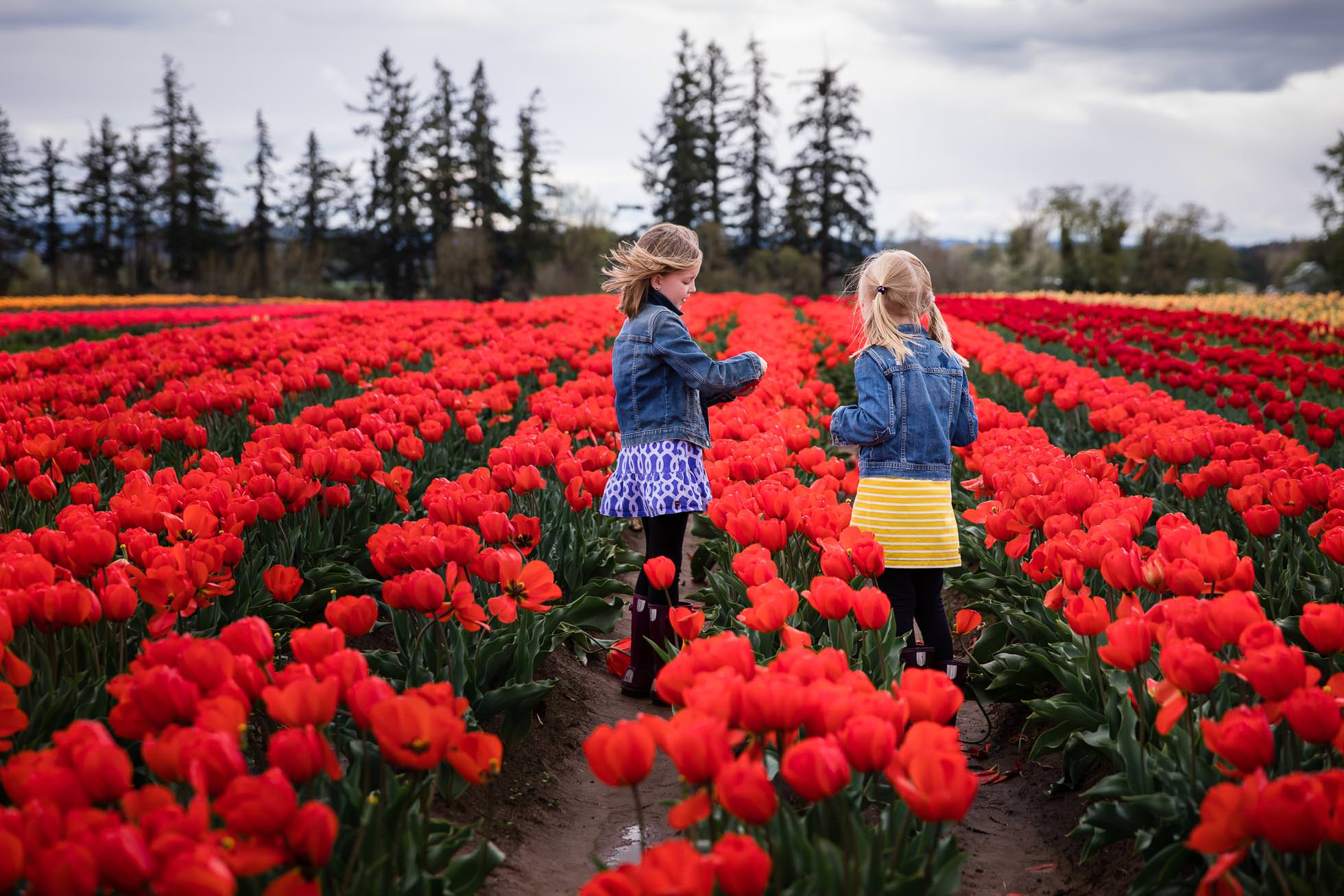 sisters in jean jackets standing in red tulip field in oregon at wood shoe tulip festival by rebecca hunnicutt farren premiere childrens lifestyle photographer in portland oregon