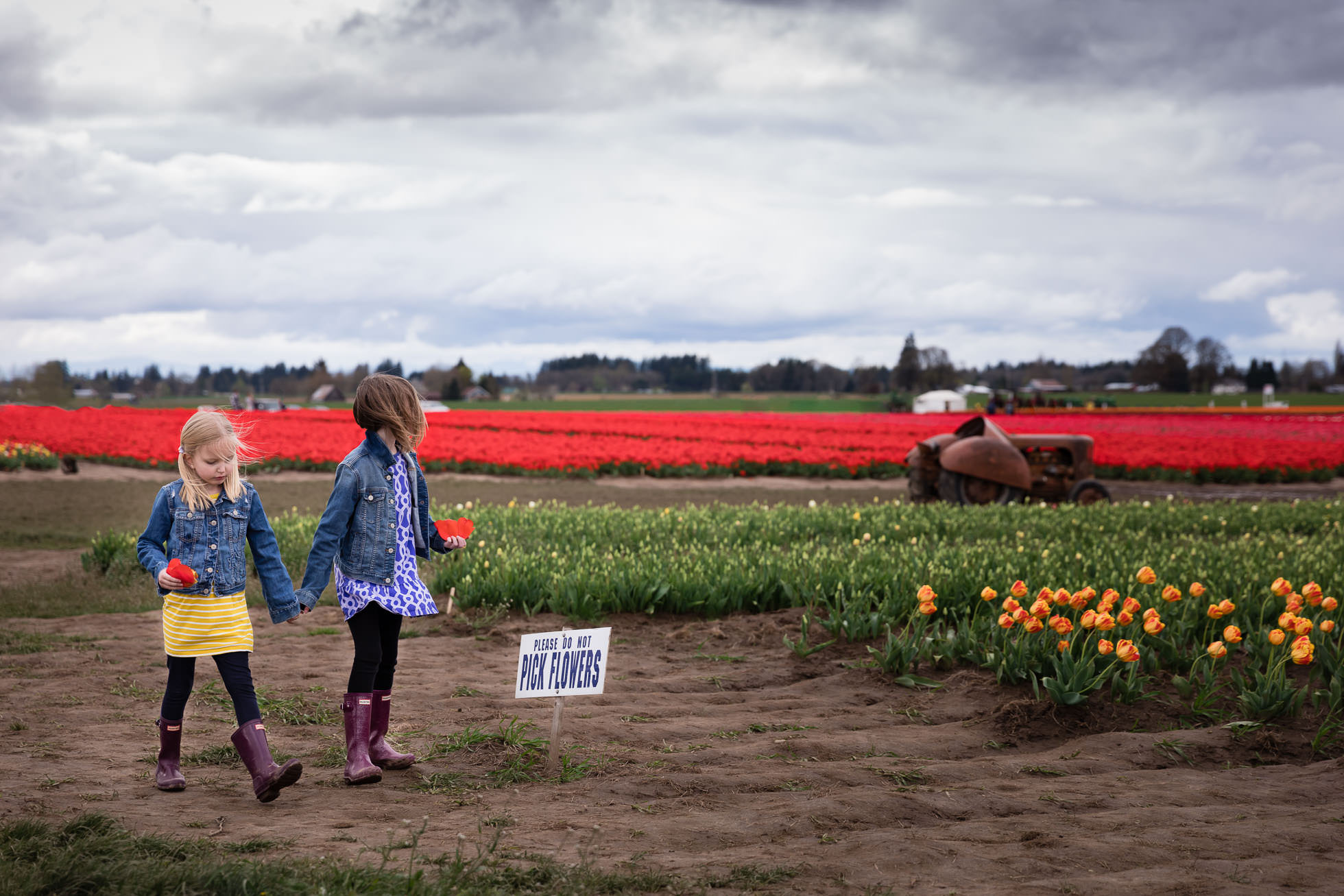 sisters walking at oregon tulip festival by do not pick flower sign holding tulip petals by rebecca hunnicutt farren portland oregon childrens photographer