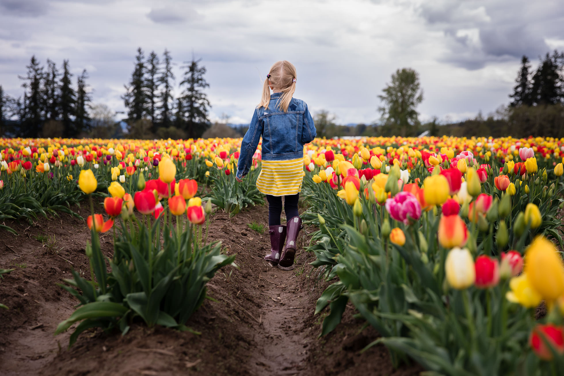 girl walking away from camera at wooden shoe tulip festival in oregon by rebecca hunnicutt farren, portland oregon premiere childrens lifestyle photographer