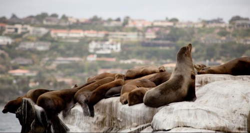 Sea lions at the Children's Pool in La Jolla. Although swimming with your baby or toddler at the Children's Pool is discouraged due to the arrival of sea lions and seals, seeing so many of these animals at a close distance is sure to be a hit with little ones.