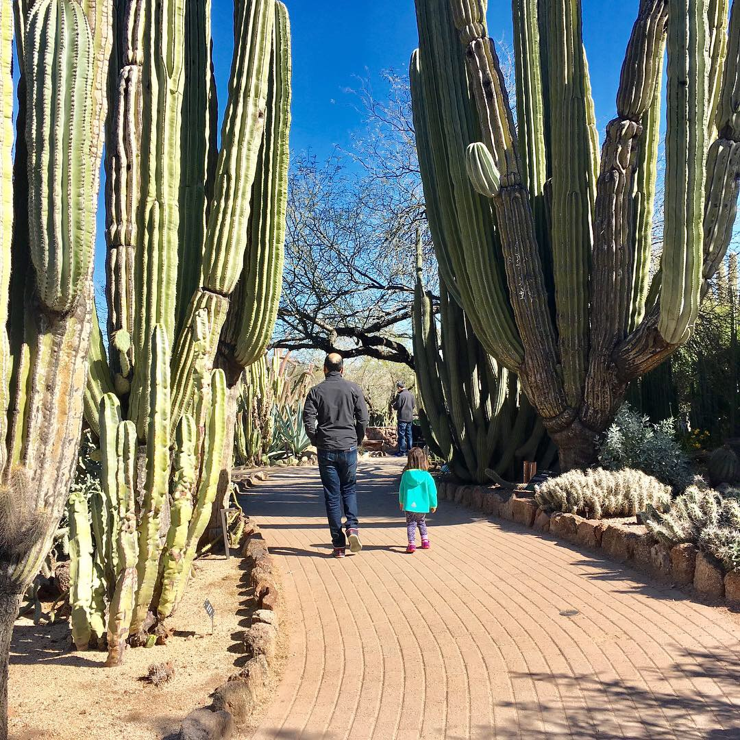 Phoenix's kid-friendly Desert Botanical Garden, an excellent alternative to hiking if you have a baby or toddler.