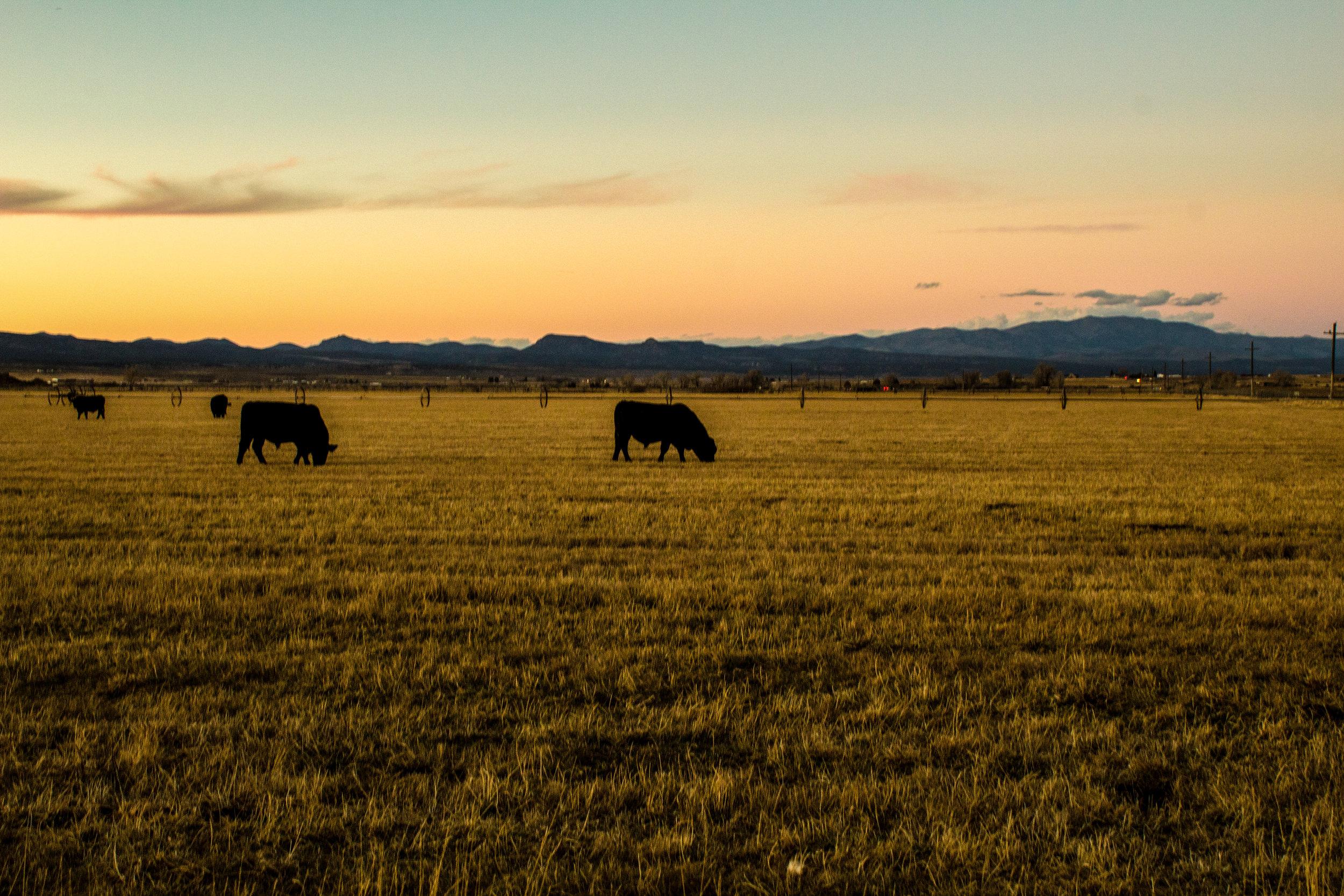Cattle Ranch - Panguitch, UT