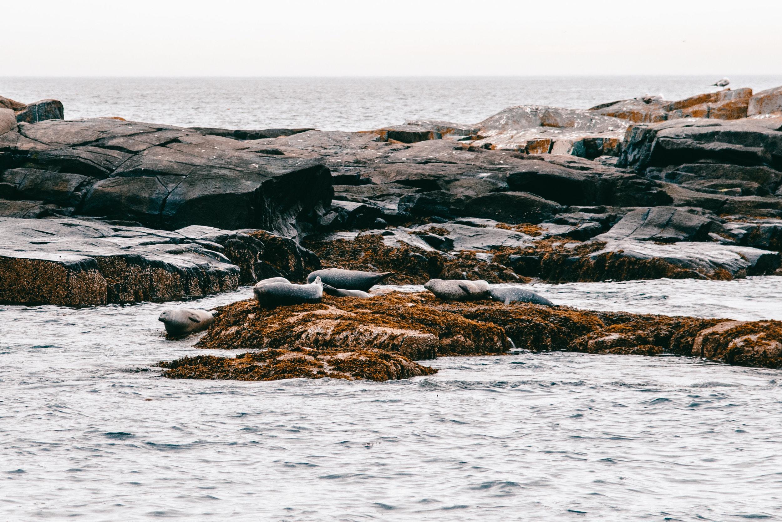 Maine-43.jpg