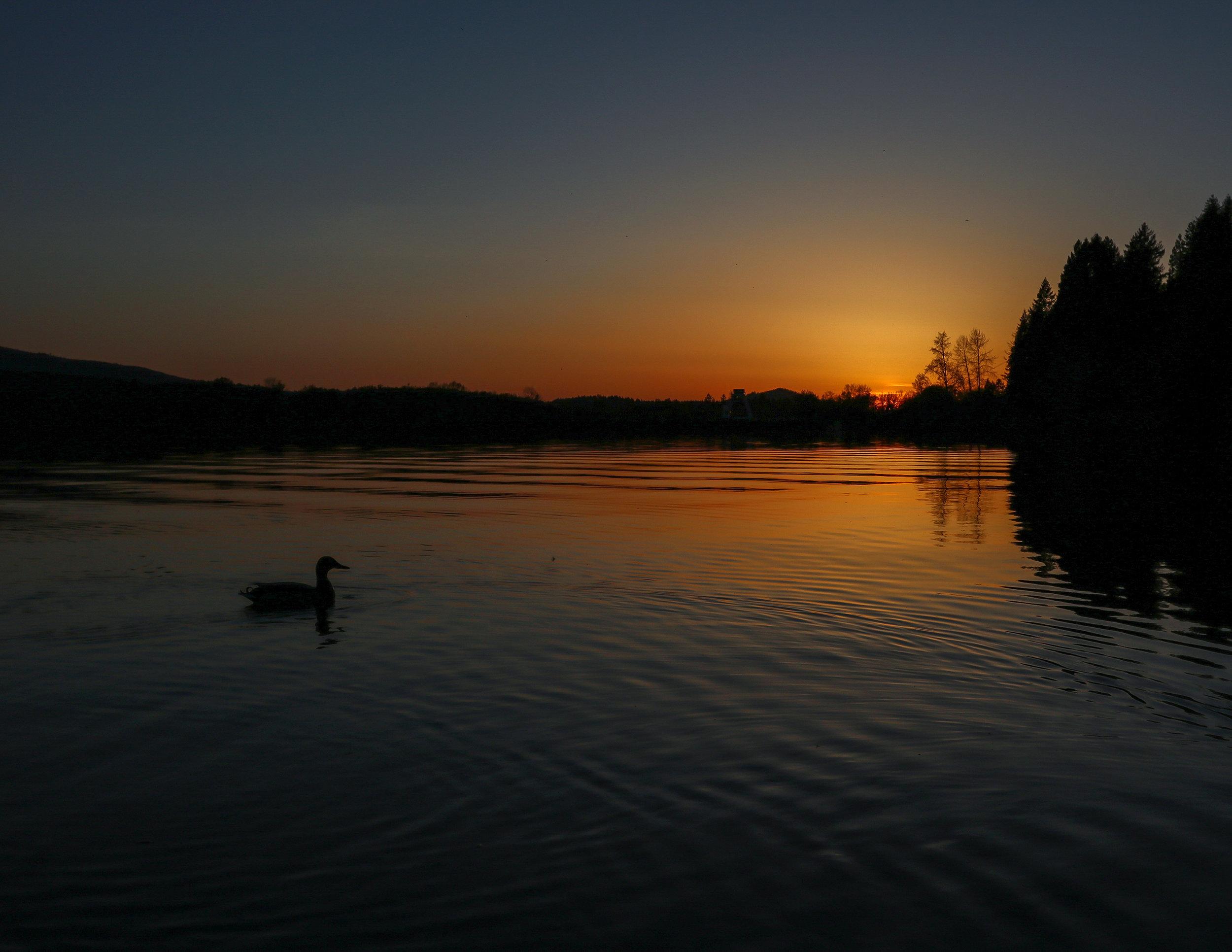 Duck on Pond.jpg