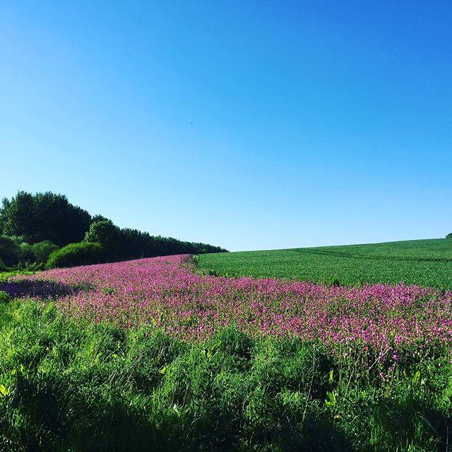 #perdixpartnership #friyay #sustainablefarming #ukfarming #sunshine