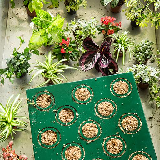 Accurata selezione delle piante