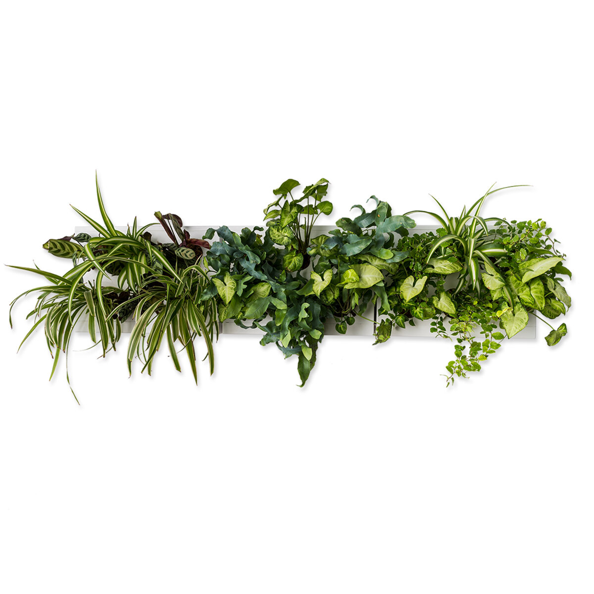 Giardini Verticali Fai Da Te ortisgreen | giardini verticali - hoh! trio smart bianco, composizione  quadri vegetali fai da te (diy)