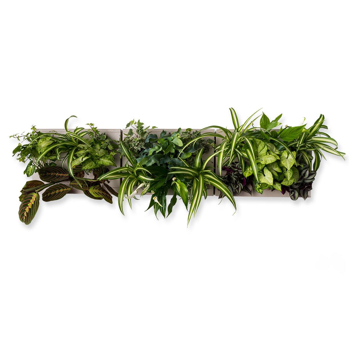 Giardini Verticali Fai Da Te ortisgreen | giardini verticali - hoh! trio smart grigio, composizione  quadri vegetali fai da te (diy)