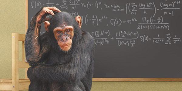 mf_monkeymath.jpg