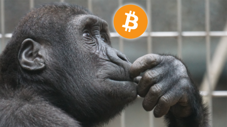 post_primate-thinking-btc-750x420.png