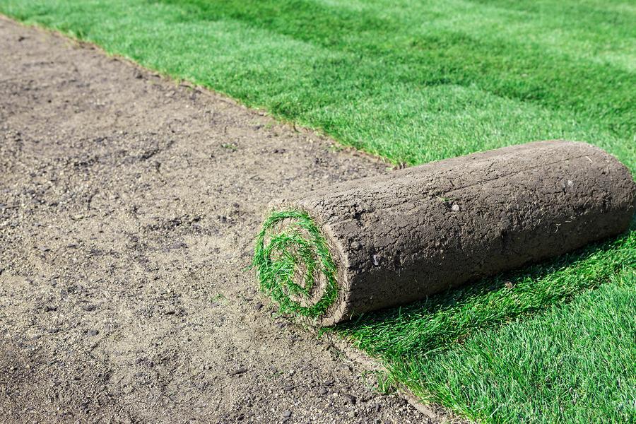 Plant-Grass.jpg