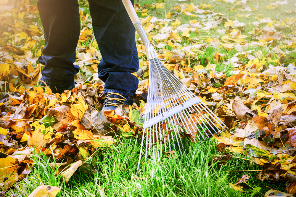 fall-lawn.jpg