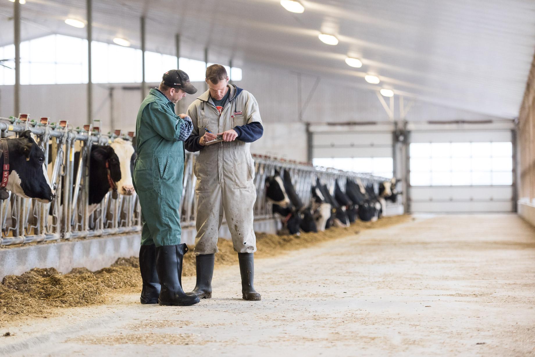 Herd-Health-Management-1.jpg