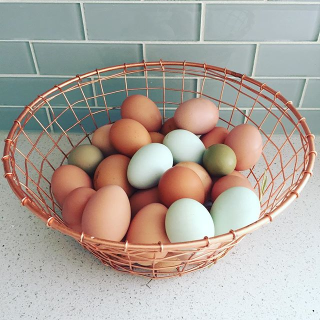 We've been busy transitioning into winter sorry we have been so quite. Nikki @ladys.hat.farm is off spending her winter in Big White while @redtail_farms and @lazytfarm hold down the fort. With that means Nikki's sweet girls 🐔have been divided between Jenna and Dana, so let us know if you need eggs!