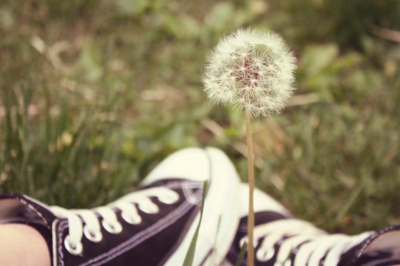 wish flower by nekopie - Sobre os Pedidos que Fazemos