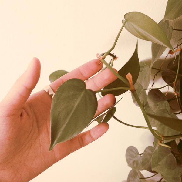 detalhe plantinhas s2 carbono - Interview: Mona Sung, Editora de Arte da Editora Carbono