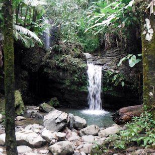 San-Juan-Rainforest-2-1024x768.jpg