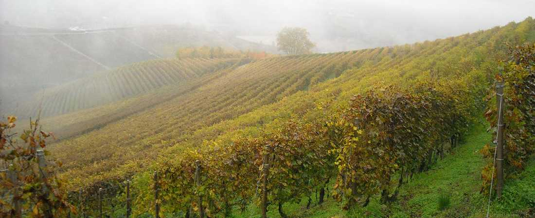 Fog-in-Barolo-large.JPG