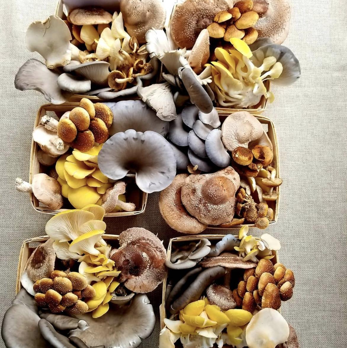 two river mushroom shot 1.png