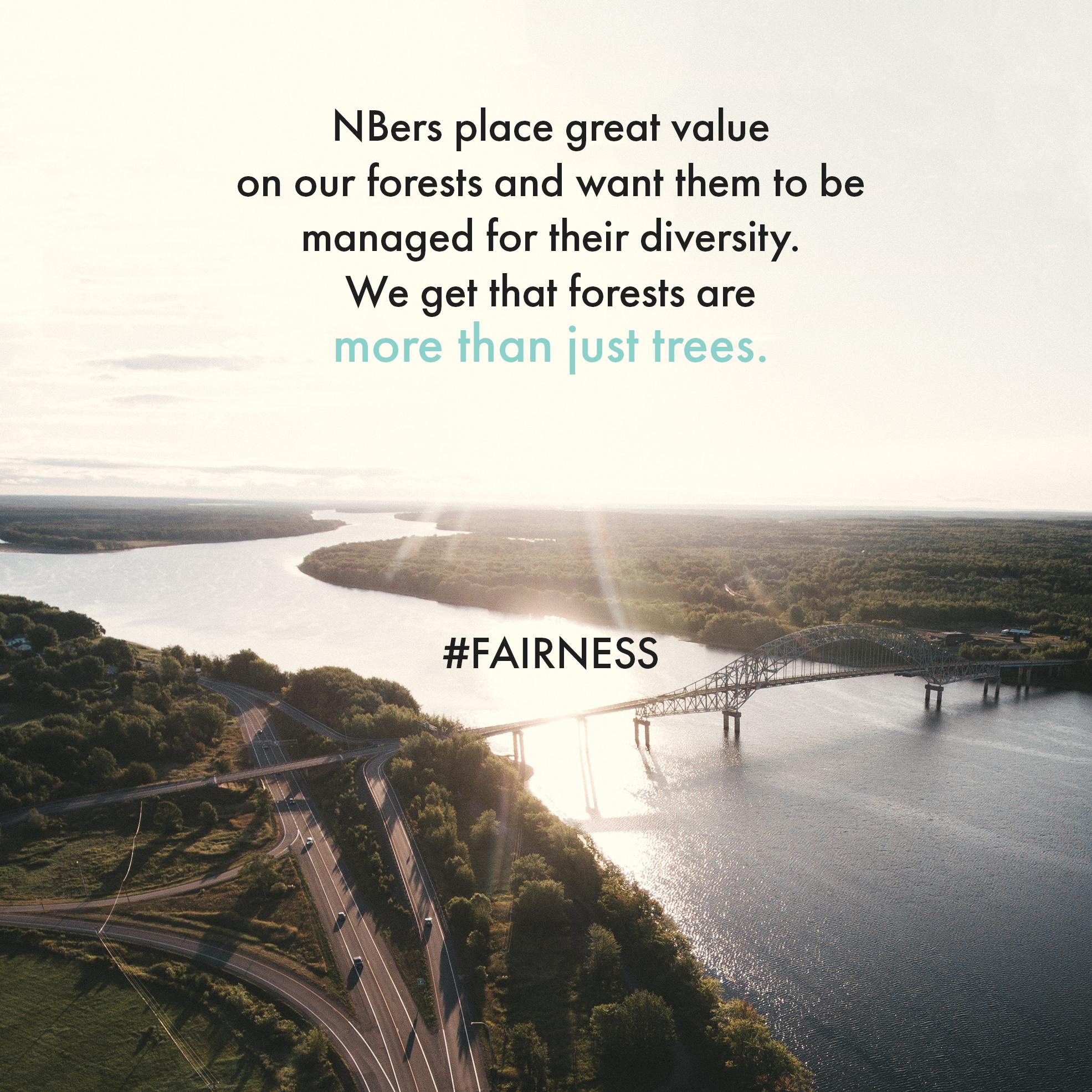 more-than-trees.jpg