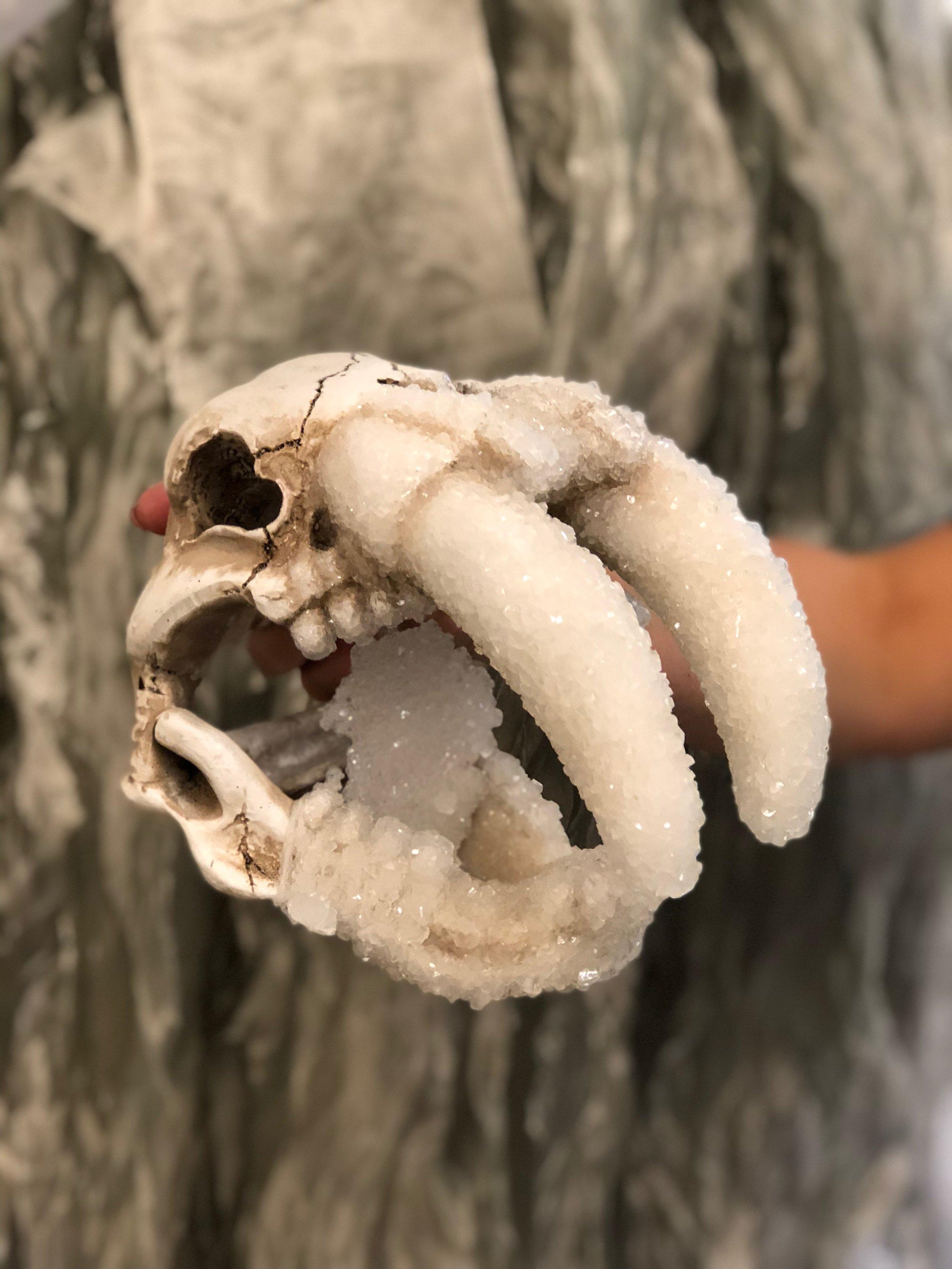 Crystal Growth : Walrus Skull (Natura Obscura)