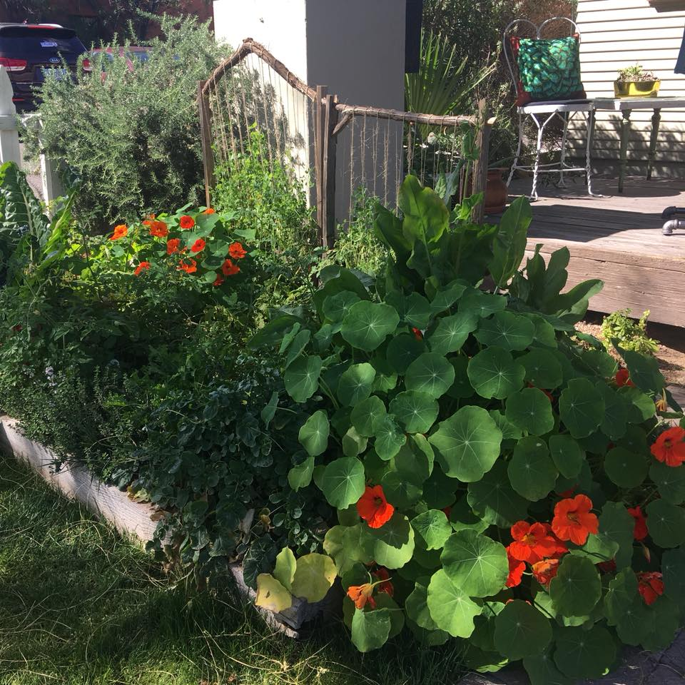 Garden outside house.jpg