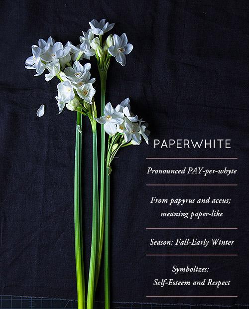 Paperwhites  - 1.jpg