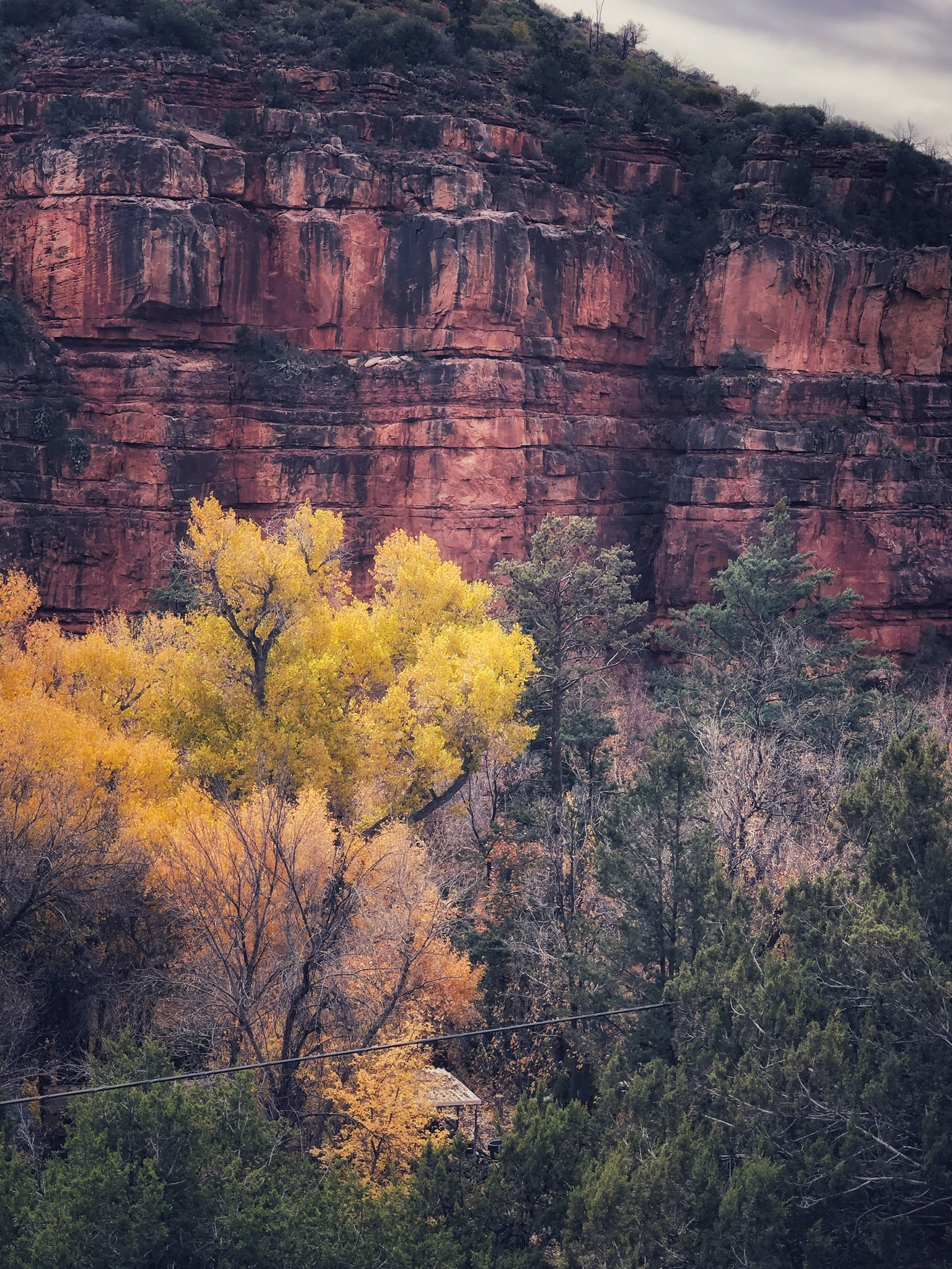 The colors of fall in Oak Creek Canyon