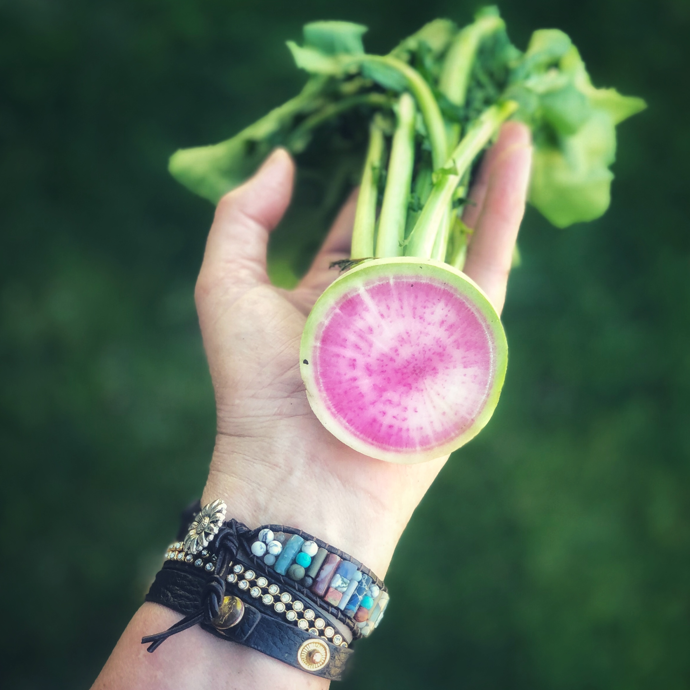 Beauty Heart Radish from my little garden by the lake